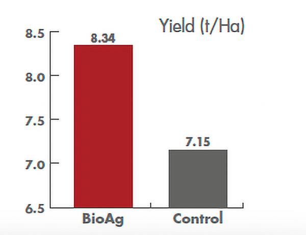 Agrifert Wheat Maximising Return dual purpose